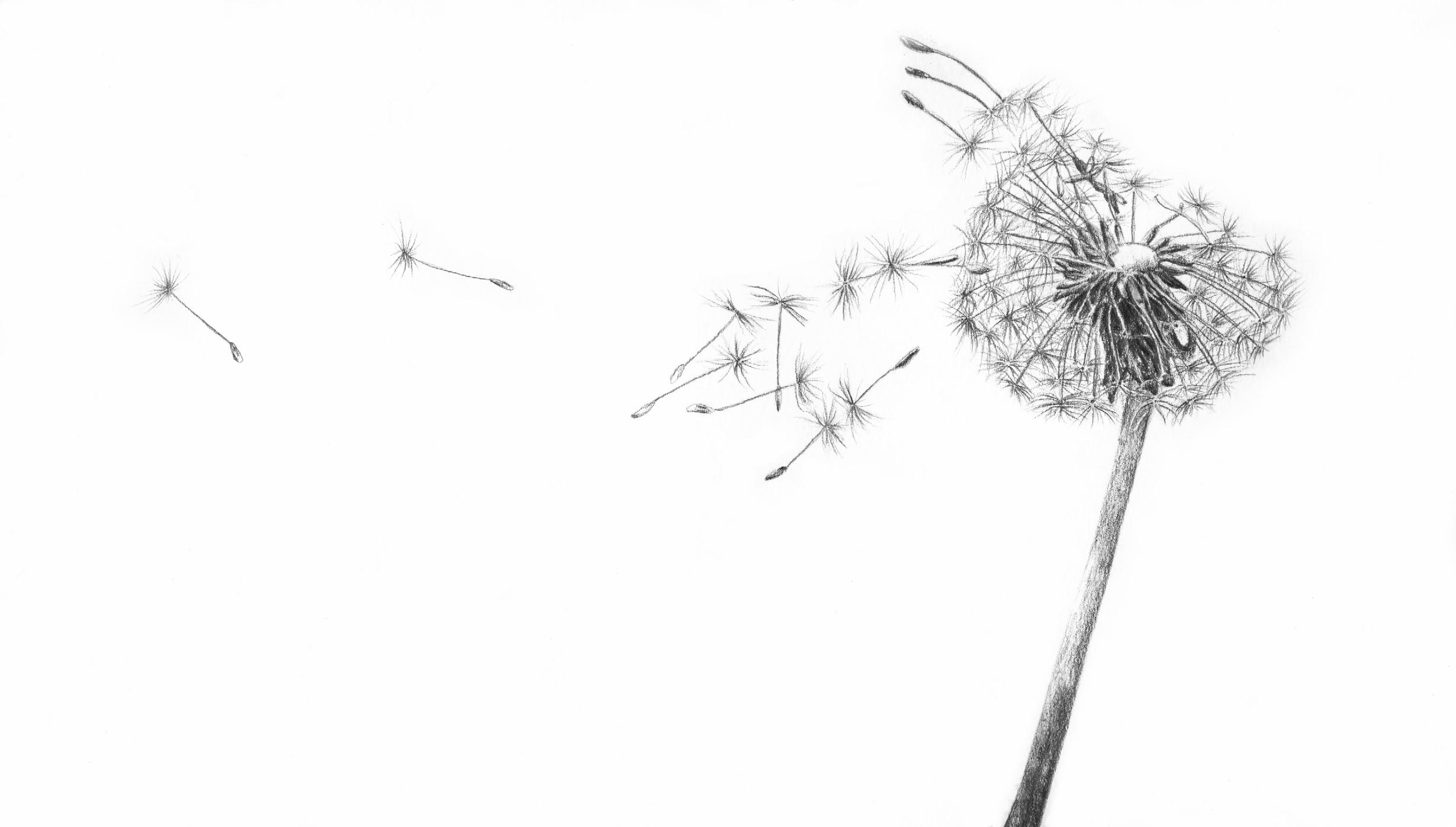 79672f639cd32b3559728e4904aebd78_dandelion-seasons-family-counseling-llc-black-and-white-dandelion-drawing_2459-1397.jpeg