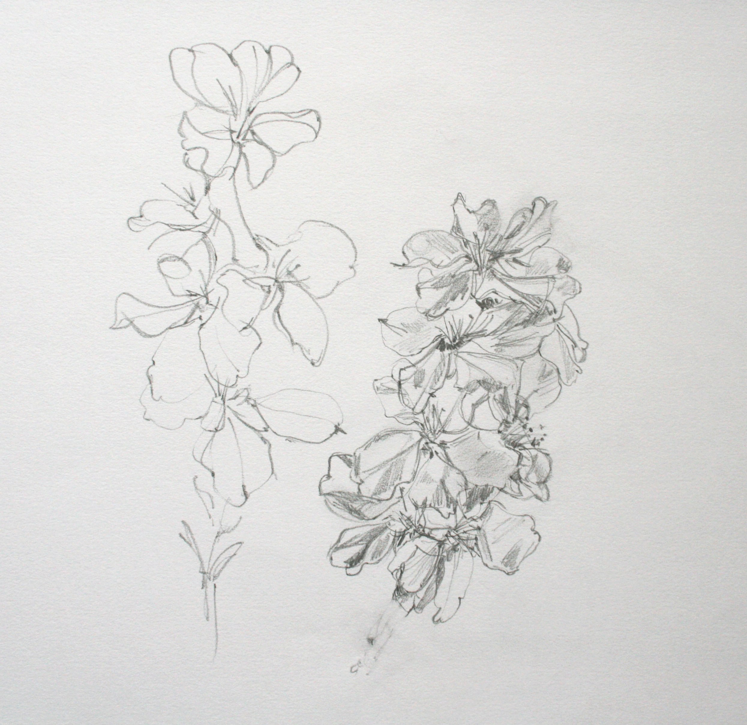 almond blossom 2, pencil on paper, 30 x 27cm, 2017 £30.00 *unavailable