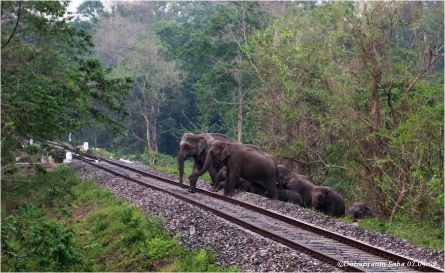 elephant_herd_approaching_the_railway_track.jpg