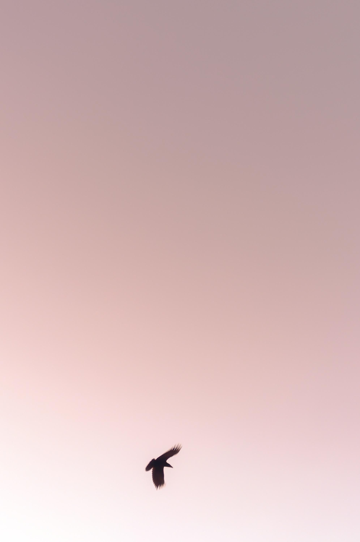 20141223-15bird (1).jpg