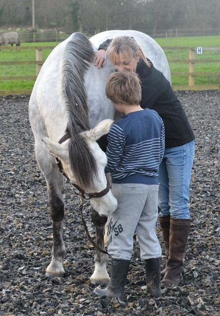equine therapy.jpg