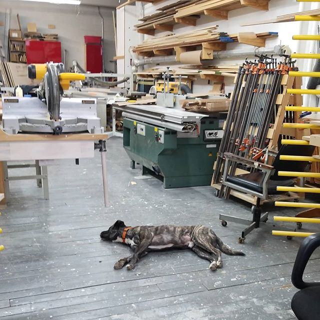 Shop dog working hard. #brooklynwoodworking #brooklynmonty #brooklynnavyyard #nycwoodworking