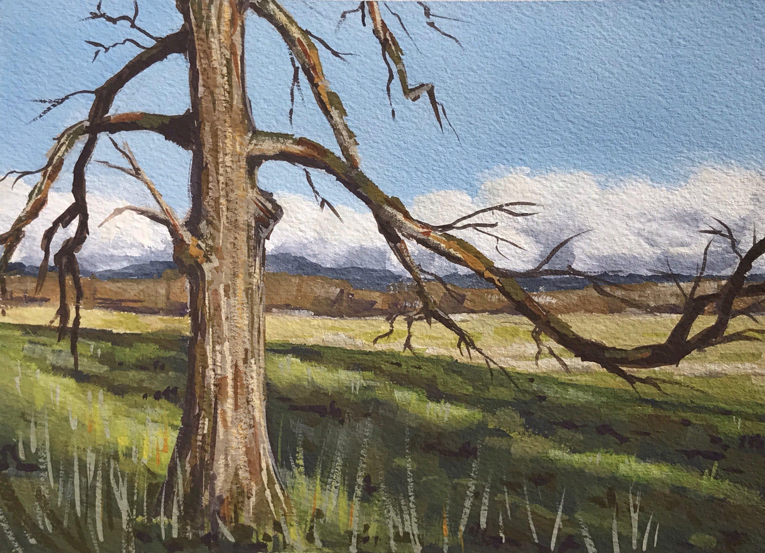 Farm oak.jpg
