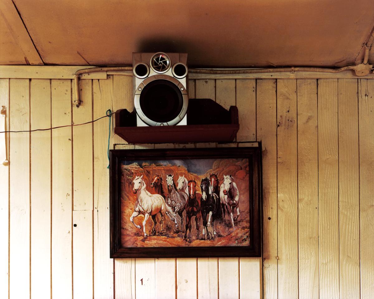 horses3website.jpg