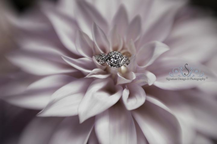 signature-design-photography_tj_39.jpg
