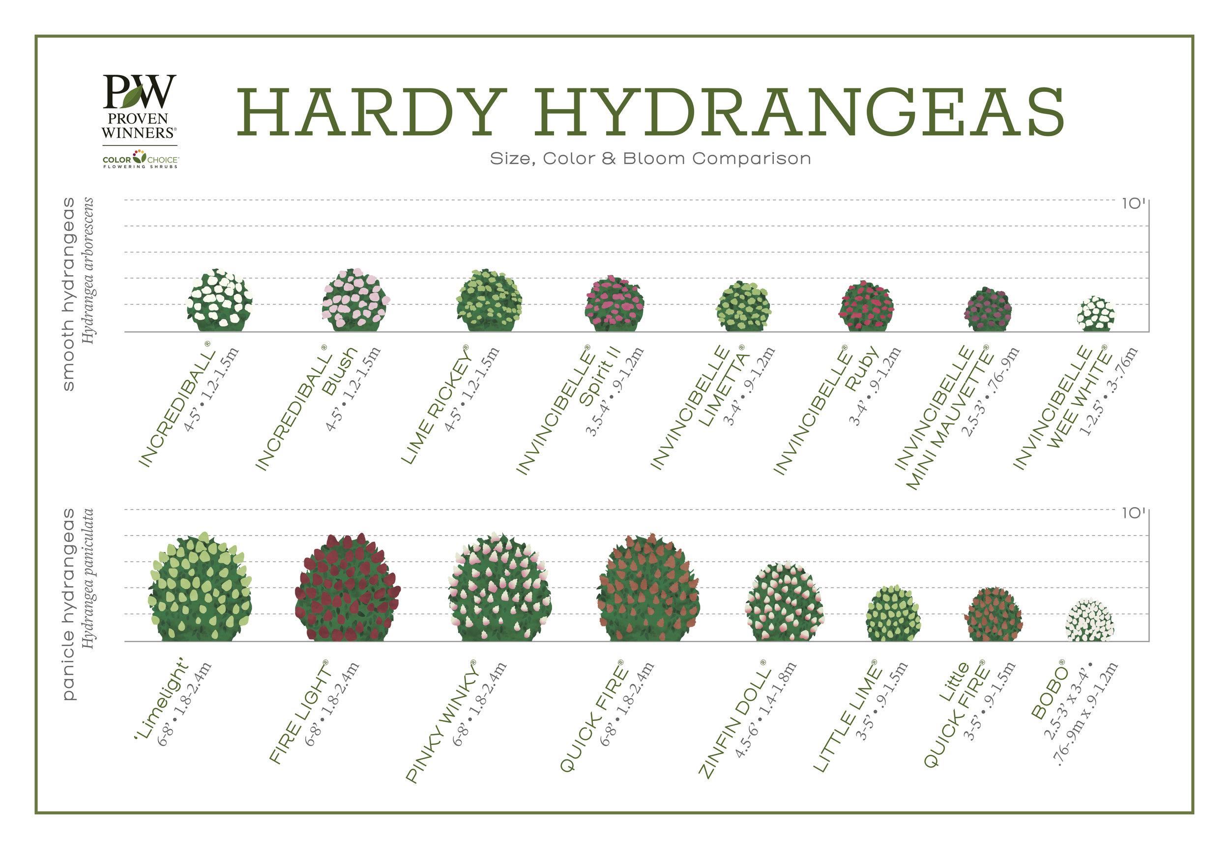 hardy_hydrangeas1.jpg