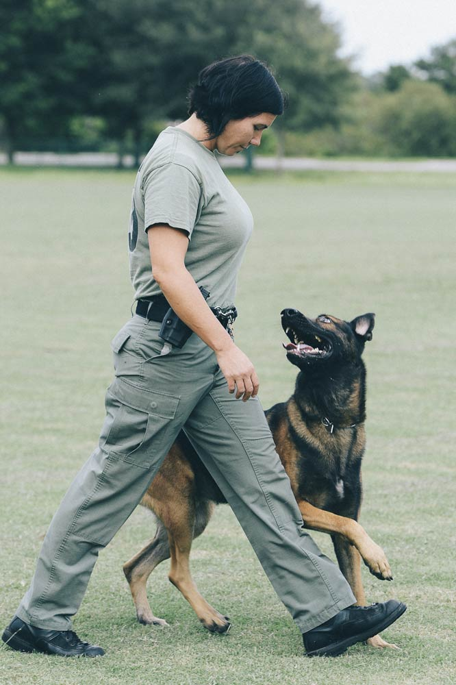 k9s-united-training.jpg