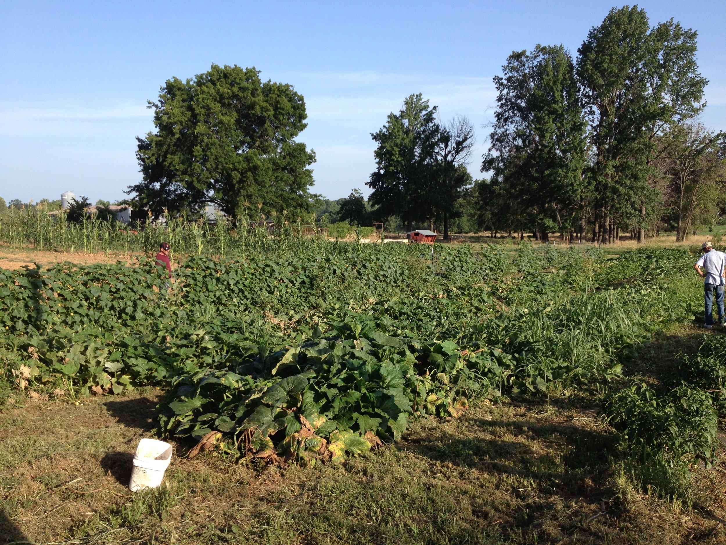 Jerry McClure_s farm in Idabel.JPG