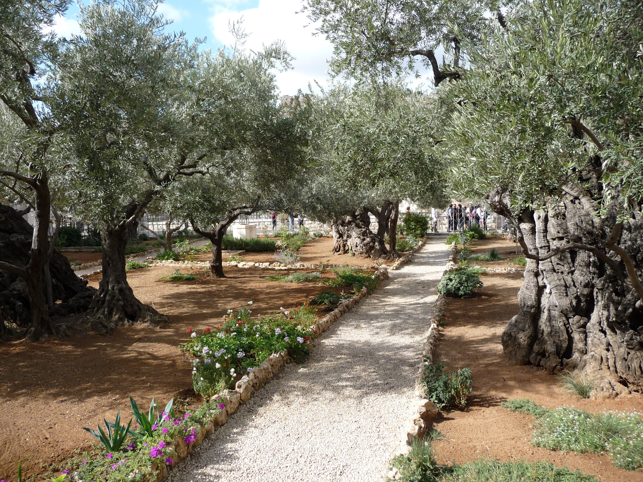 Garden of Gethsemane 2.JPG