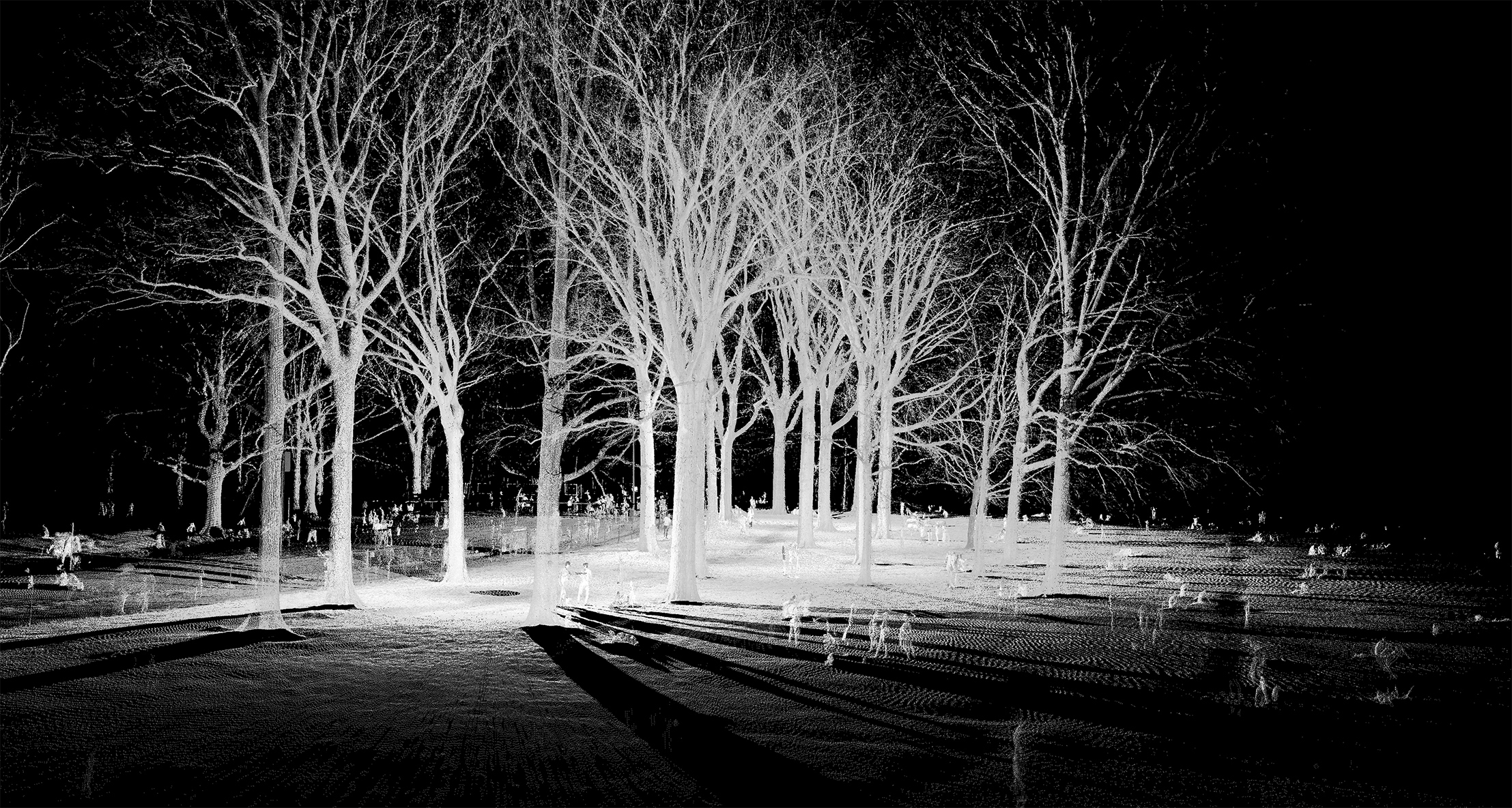 mynd-workshop-central-park-sheep-meadow-trees-3-3D-laser-scanning-point-cloud-new-york.jpg