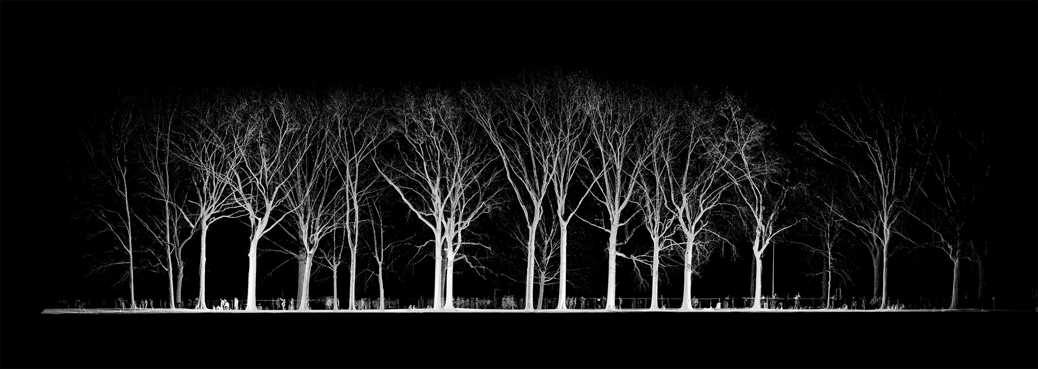 mynd-workshop-central-park-sheep-meadow-trees-13-3D-laser-scanning-point-cloud-new-york.jpg