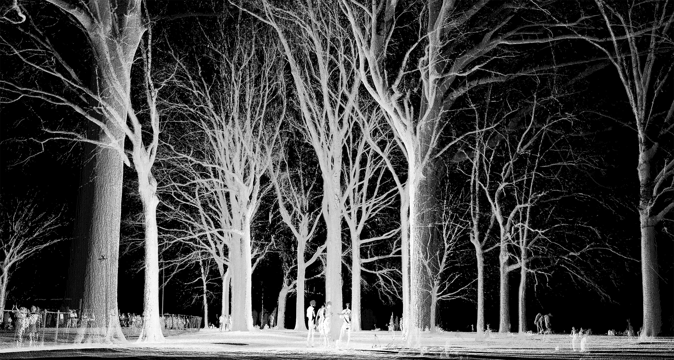 mynd-workshop-central-park-sheep-meadow-trees-3D-laser-scanning-point-cloud-new-york.jpg