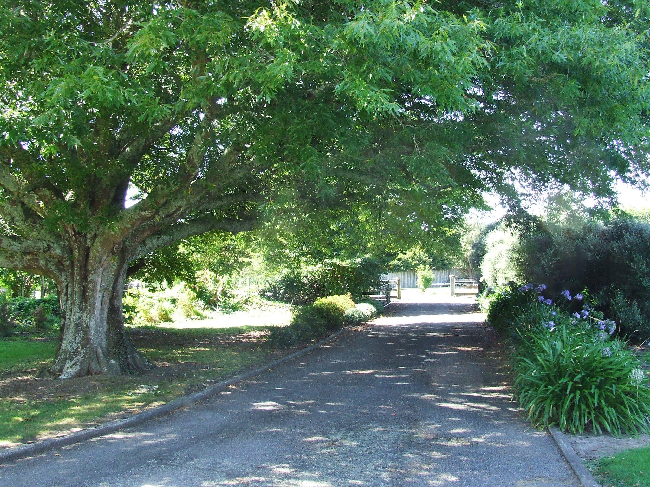 Rear driveway entrance