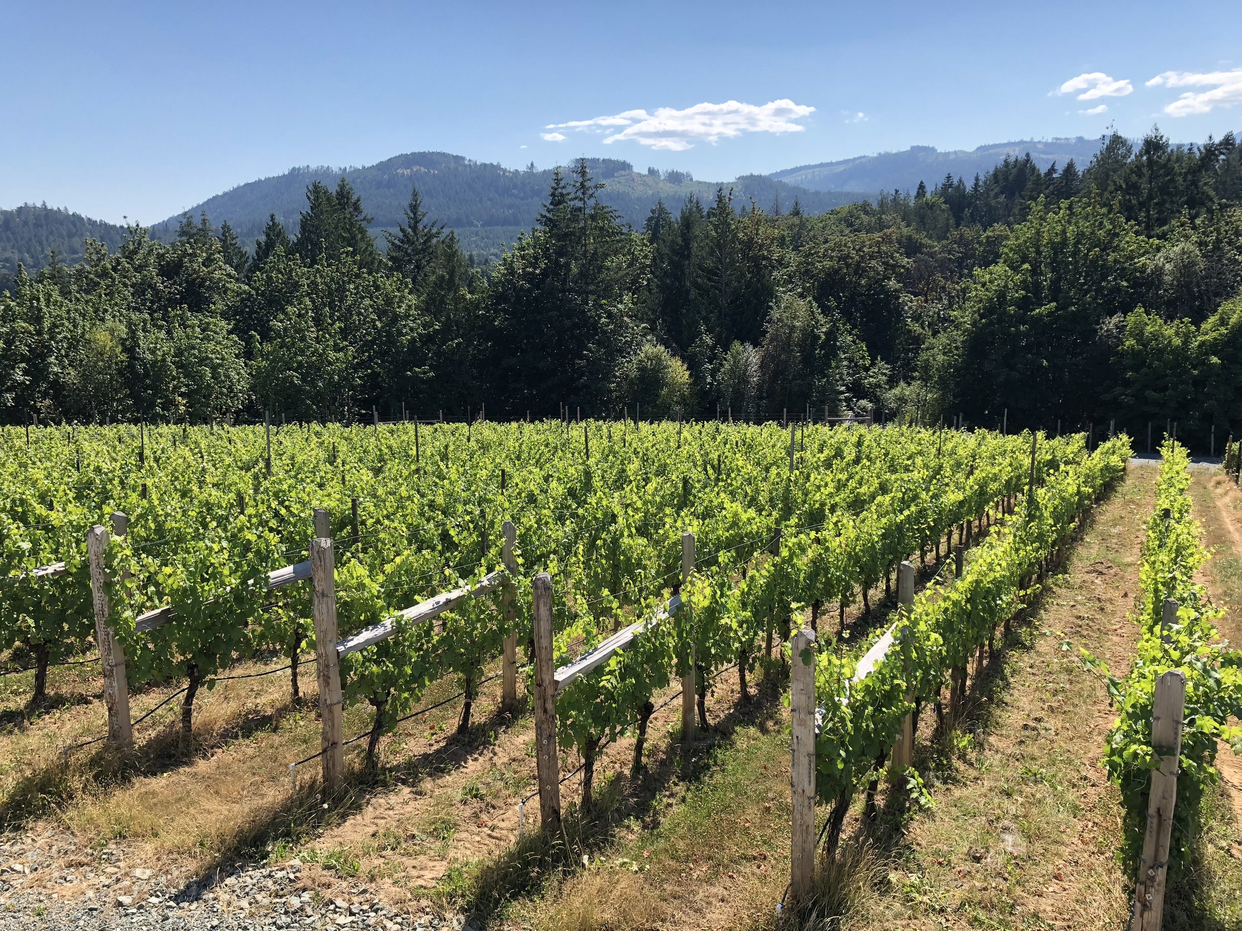 COBBLE HILL  Cobble Hill is a small hamlet that is surrounded by quaint acreages, hobby farms, vineyards and artisan agricultural production. A true food lovers paradise!
