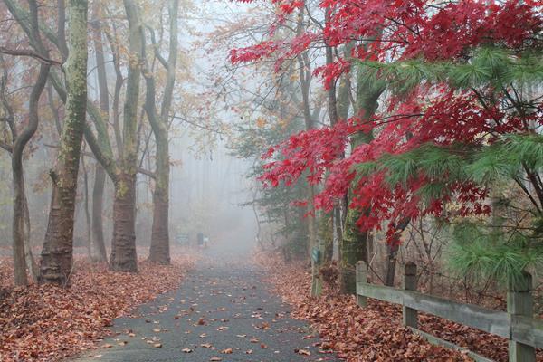 Foggy-Morning.jpg
