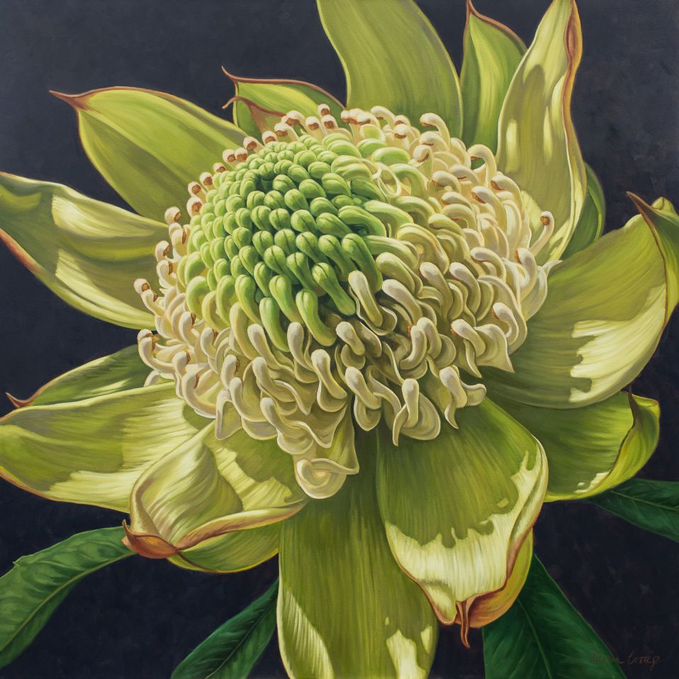 Green Waratah on Indigo