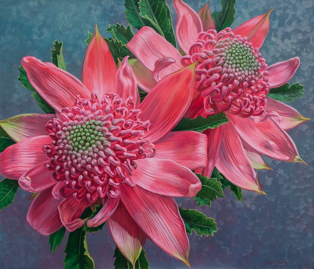 Pink Waratahs on Blue