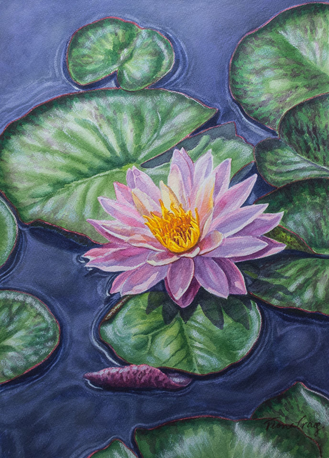 Sunfire Water Lily