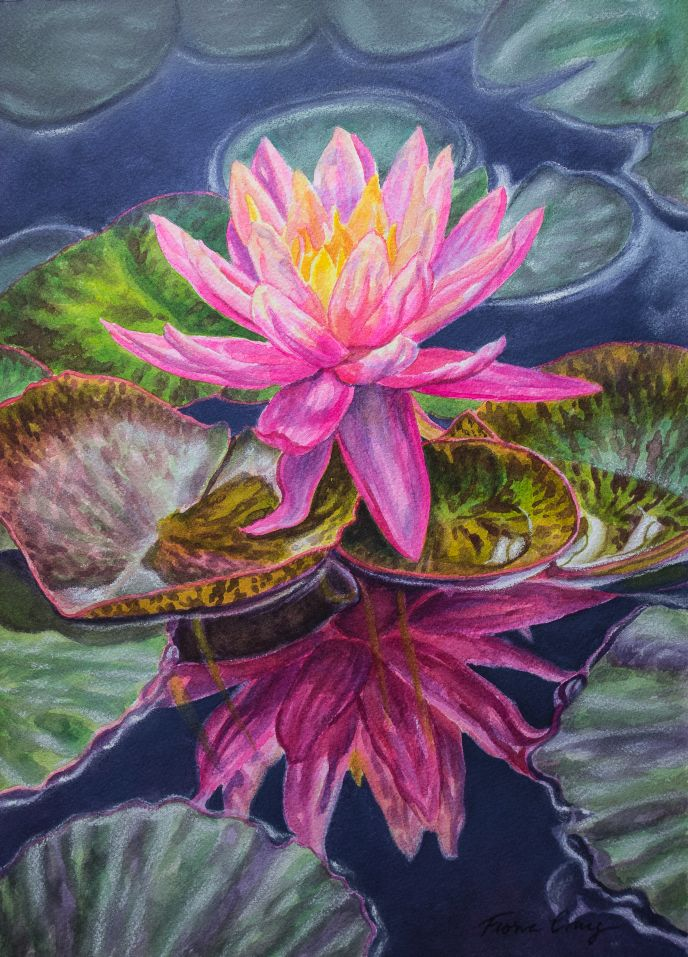 Water Lily: Sunfire Reflected