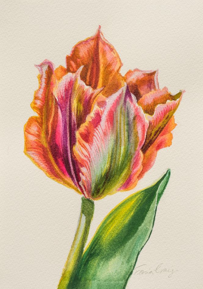 Golden Artist Tulip