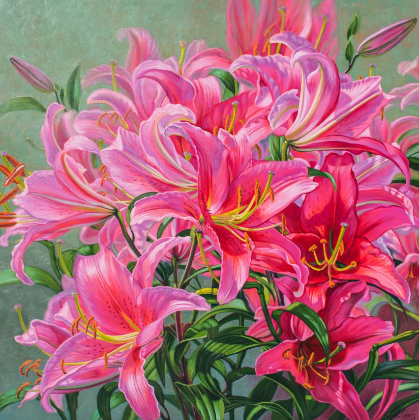 Hot Pink Asiatic Lilies