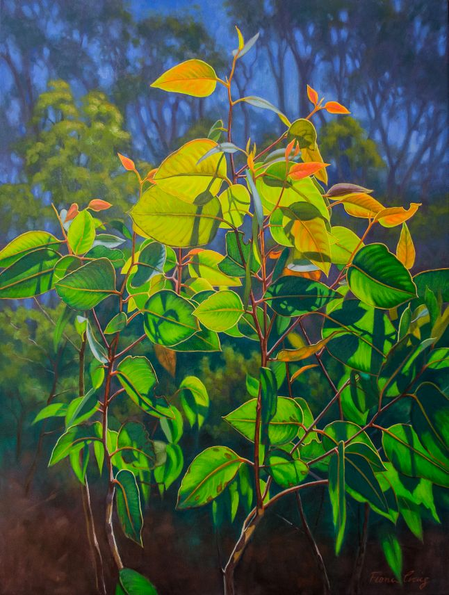 Sunlit Gumleaves 15 (Blue Mountains)