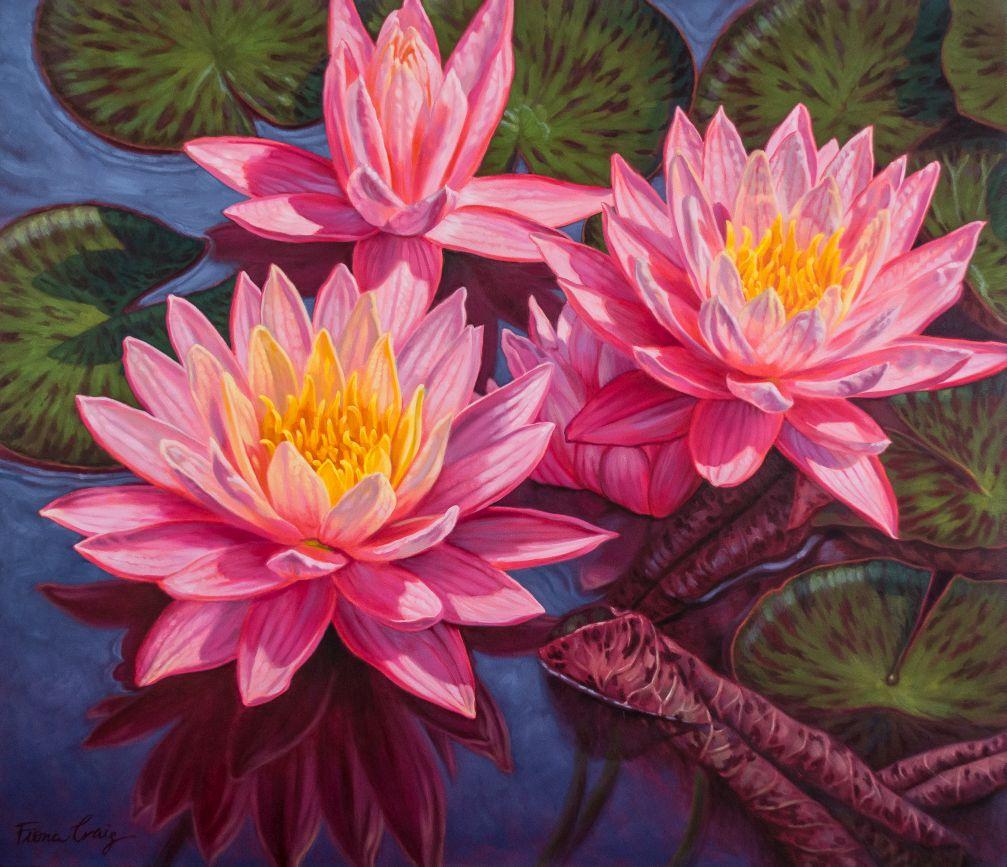 Water Lilies 3: Sunfire