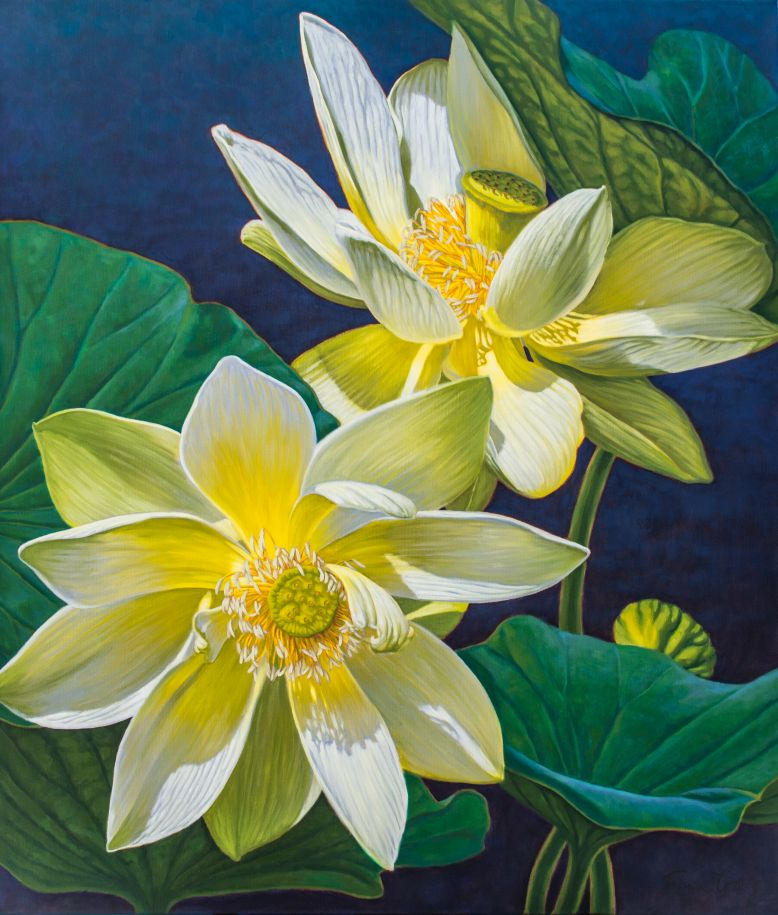 White Lotuses 1