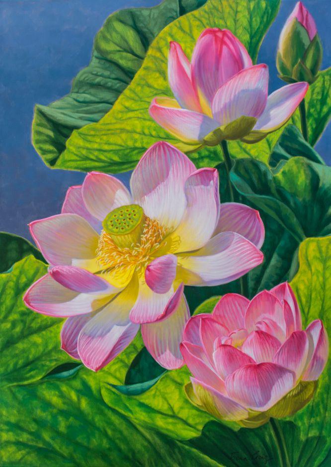 Pink Lotuses 2