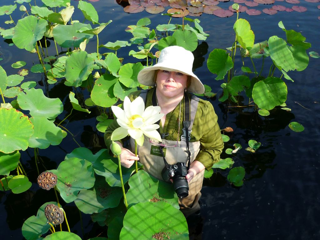 Lotuses as big as your head at the Garfield Park Conservatory's lily pond. Photo by A. D. Clark