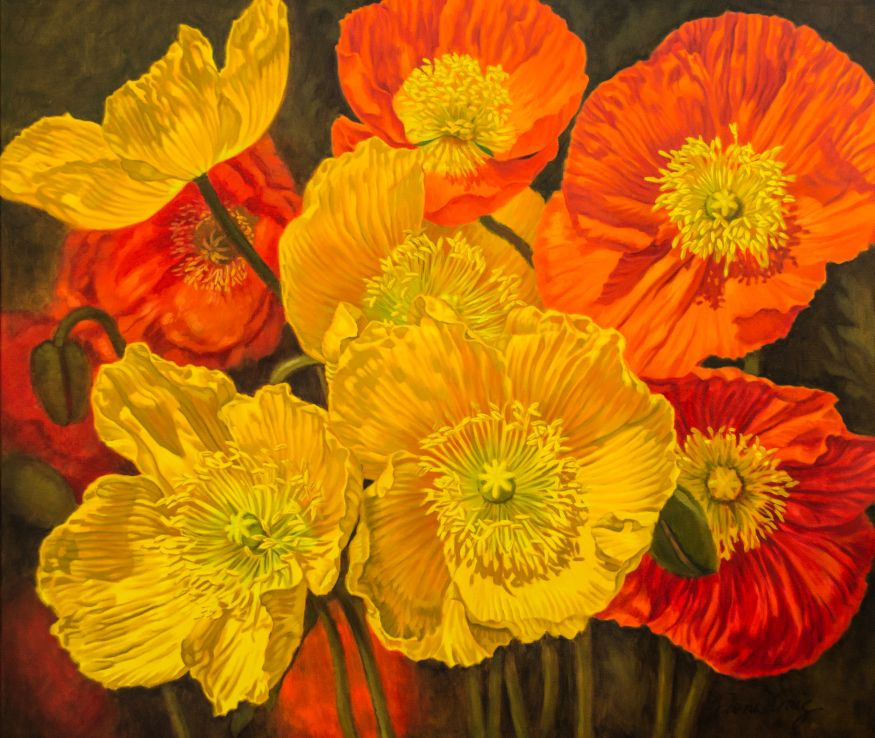 Iceland Poppies, 2
