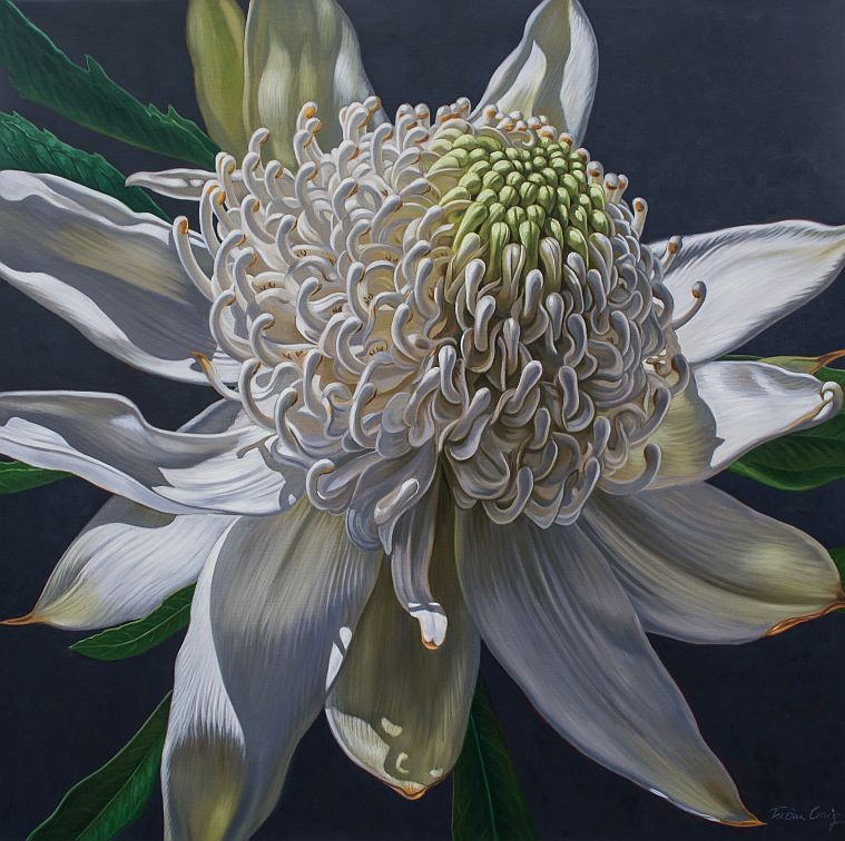 "'Blue Mountains White Waratah' - Oils on poly-cotton canvas, 48"" x 48""."