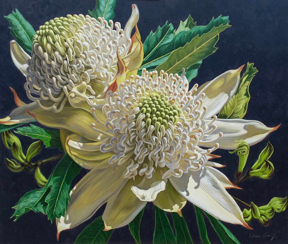 White Waratahs and Black Kangaroo Paws