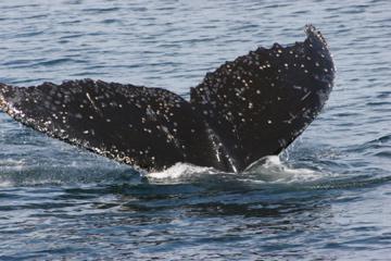 WhalesTale.jpg