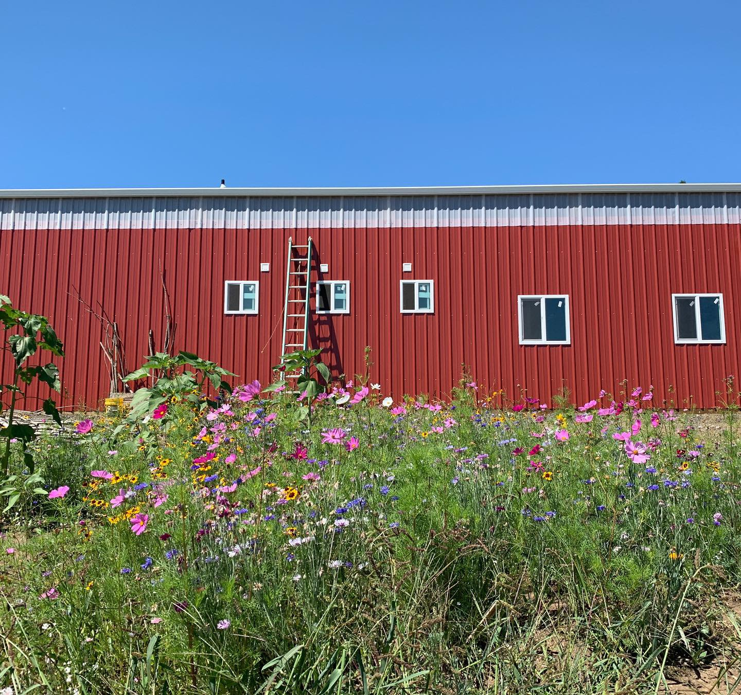 Exterior shot of the new barn with some beautiful wild flowers planted by a friend and neighbor.