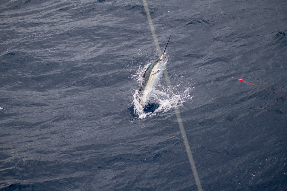 Sailfishing on 62' Rybovich