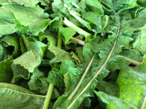 According to  MedicalNewsToday , the health benefits of turnip greens include providing one of the highest calcium contents per gram of any fruit or vegetable.