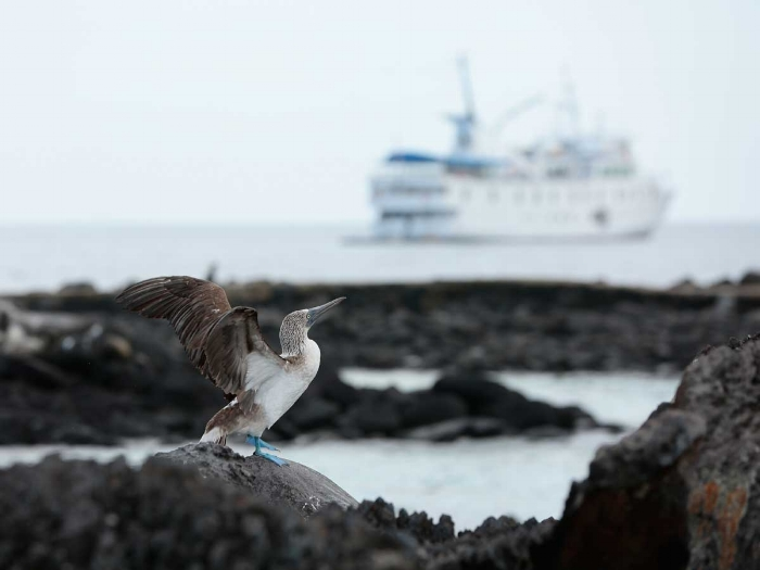 UnCruise to the Galapagos Islands