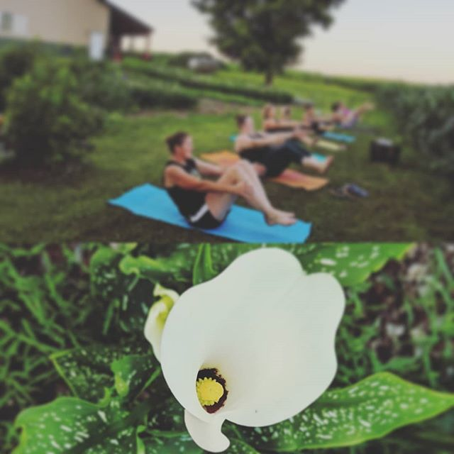 Yoga and you-pick flowers at @rustic_designs_flower_farm  Every Thursday at 7:45pm through August 29  Register at eventbrite.com  #yoga #yourflock #yogaflock #flowers #kando