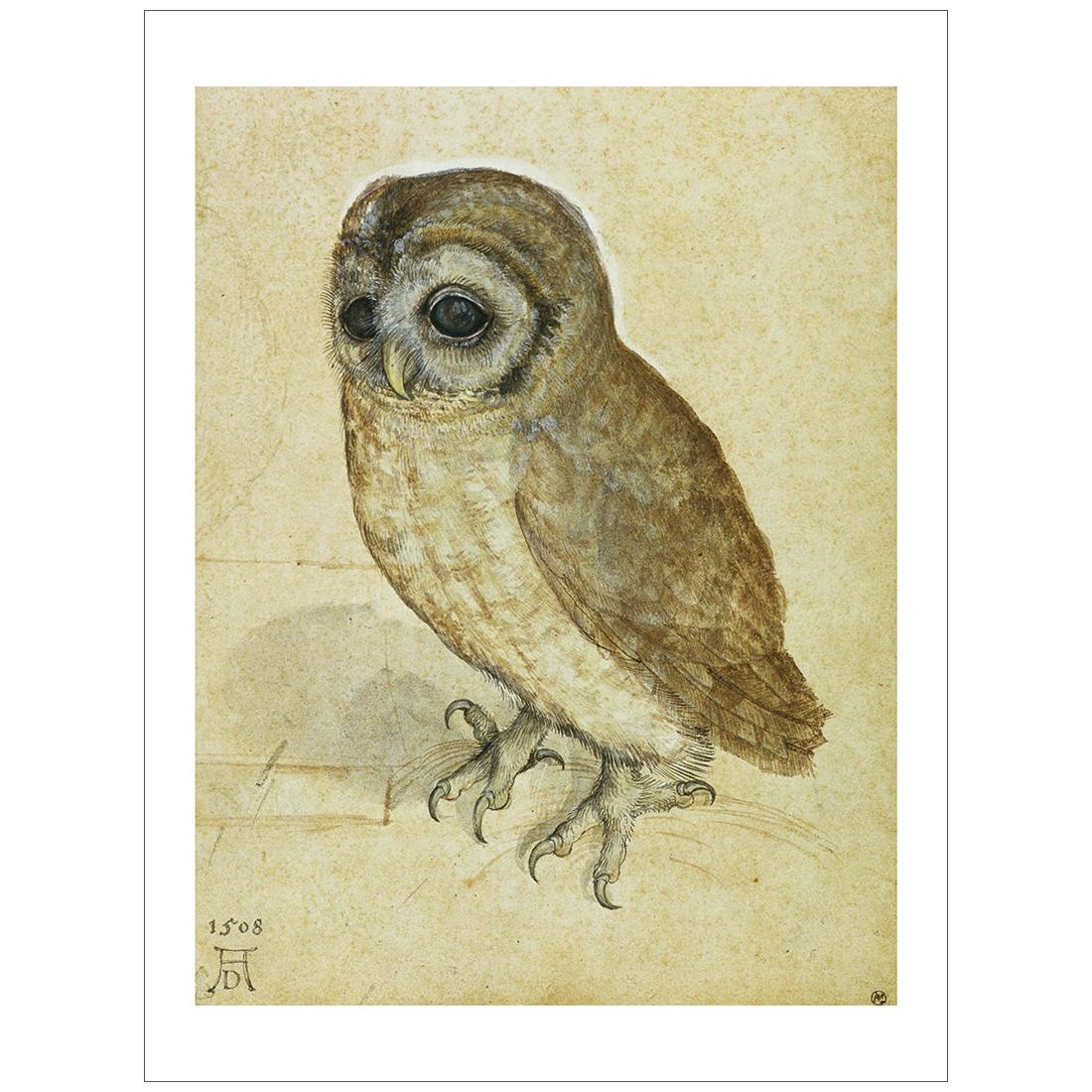 Durer - Little Owl 1508
