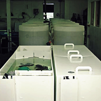 Brood Tanks by BioNovations, Northumberland Fisheries Lobster Hatchery, NS