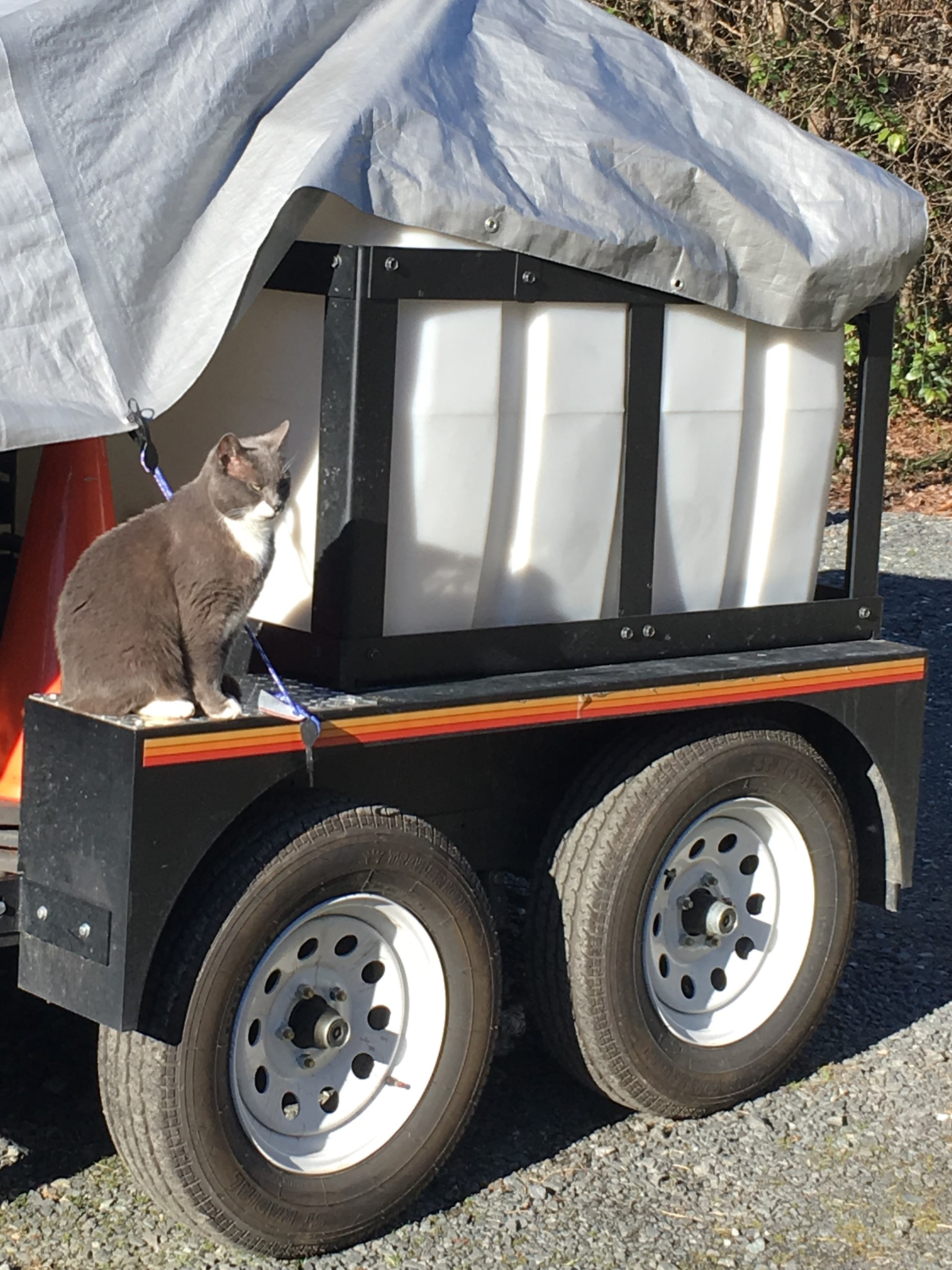 Guard Kitty