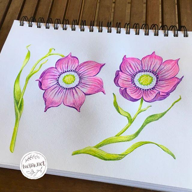 Day 52 of #the100dayproject. Flowers. . . . @lindsayjeanthomson  @VictoriaJohnsonDesign #birdsbutterfliesandblooms  #paintedflowers #artchallenge #paintingchallenge #instagramchallenge #paintanyway  #dailysketch #lovetopaint  #guachepainting  #floralillustration #greetingcarddesign  #makeitindesign #makeartthatsells #MATSHomeDecor #homedecor #Nellik #patternobserver #artlicensing #ArtLicensingShow #artforlicensing #thecolorgang #surfacedesign #ArtLicensing #artforproducts #artistsofinstagram #magicalplant  #spdcommunity #botanicalillustration #greetingcarddesign #folkart