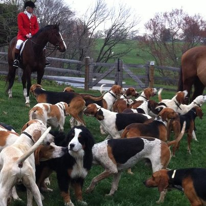 Hunting hounds preservation in PA during Radnor Hunt