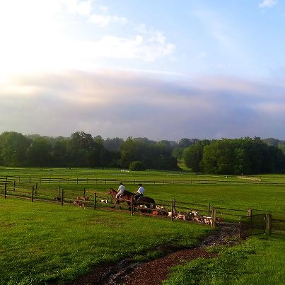 Riders on horses lead group of hunting foxhounds through field