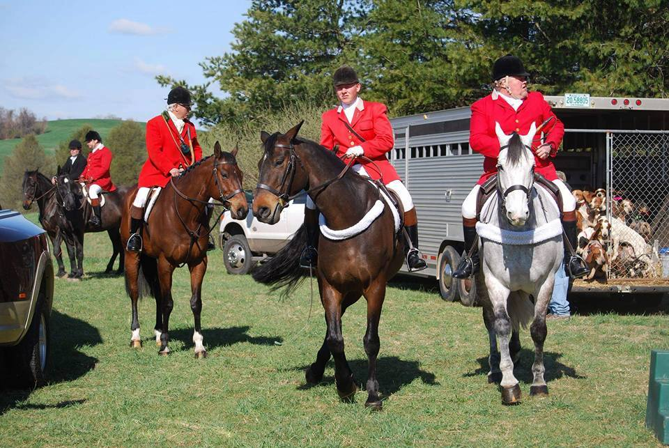 Foxhunting conservation with riders on their horses and hunting hounds