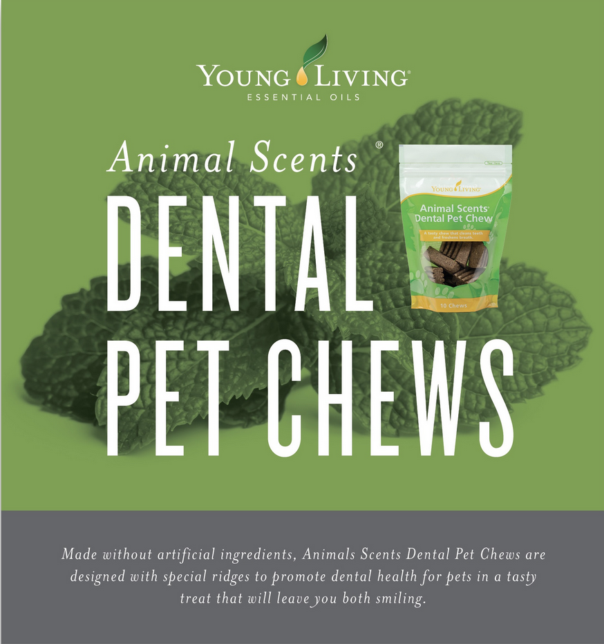 You'll find lots of animal lovers at SBW - students and instructors alike! We want the best for our pets, and here's just one example of how we love them -  PET PRODUCTS WE LOVE