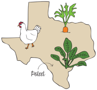 Texas-Illustration-e1463210964997.png