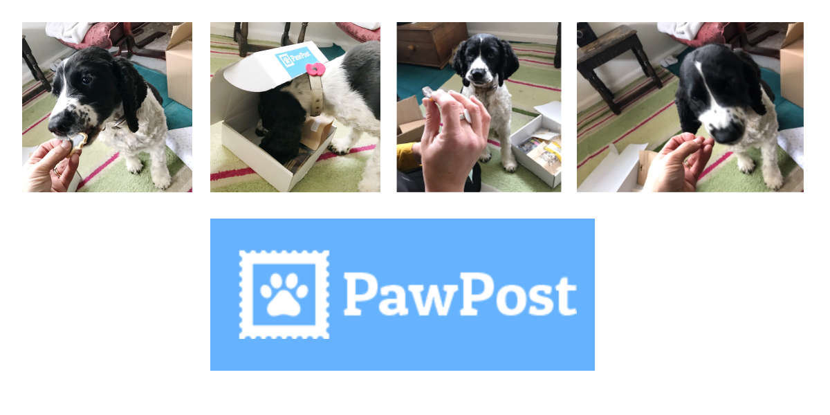 ipaintdogs meets Pawpost
