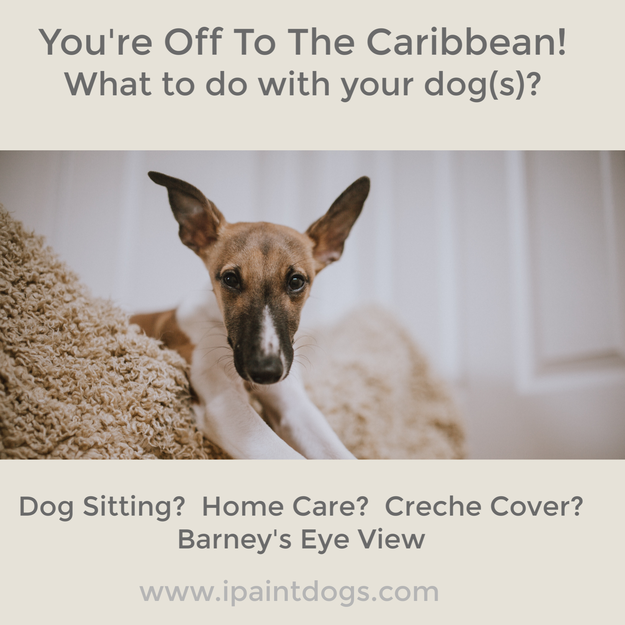 Dog Sitting Options, Holiday Care for dogs, Samantha Barnes, ipaintdogs.com